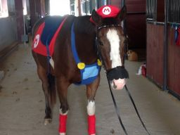 A horse dressed as Mario... why not?
